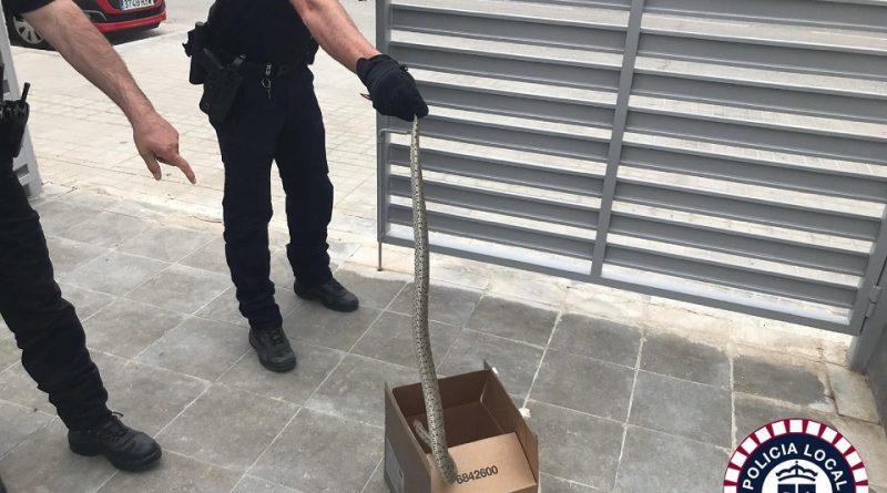 Policía de Valdemoro recoge dos culebras