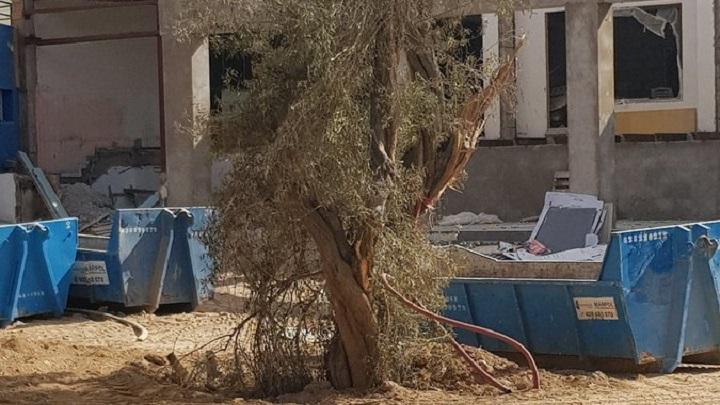 El ayuntamiento permite maltratar árboles